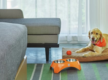 Water and Food Bowls and Chew Toy Next to Dog Sitting on Dog Bed in Guest Room Lounge Area