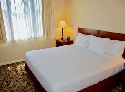 Allergy Friendly 1 King Bed Suite