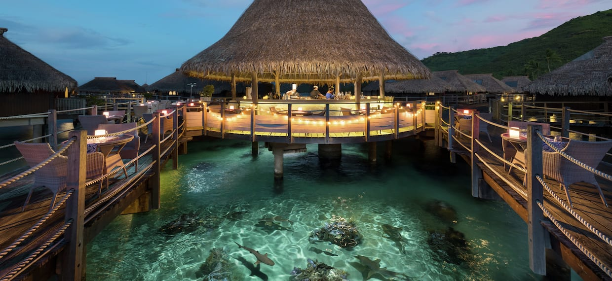 Bar with Seating Area Over Water with Sharks
