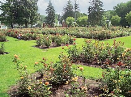Central Rose Garden